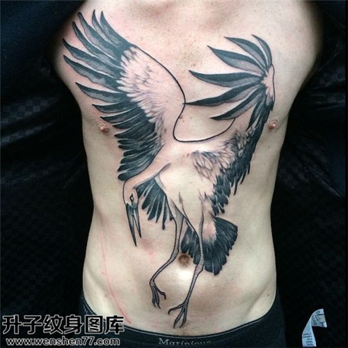 前胸仙鹤纹身图案